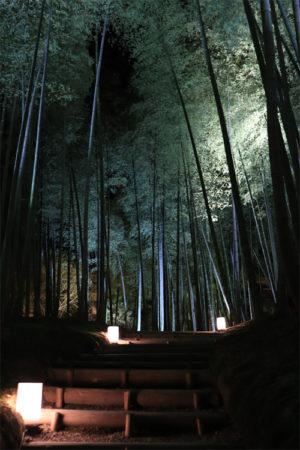 高台寺の竹林(ライトアップ)