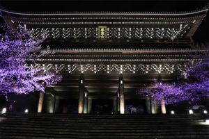 知恩院の桜ライトアップ