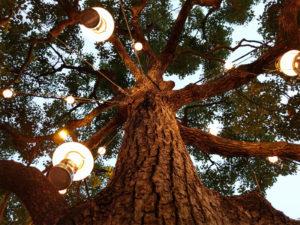 木に灯るランプ