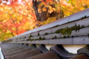 瓦に生える苔と後ろの紅葉