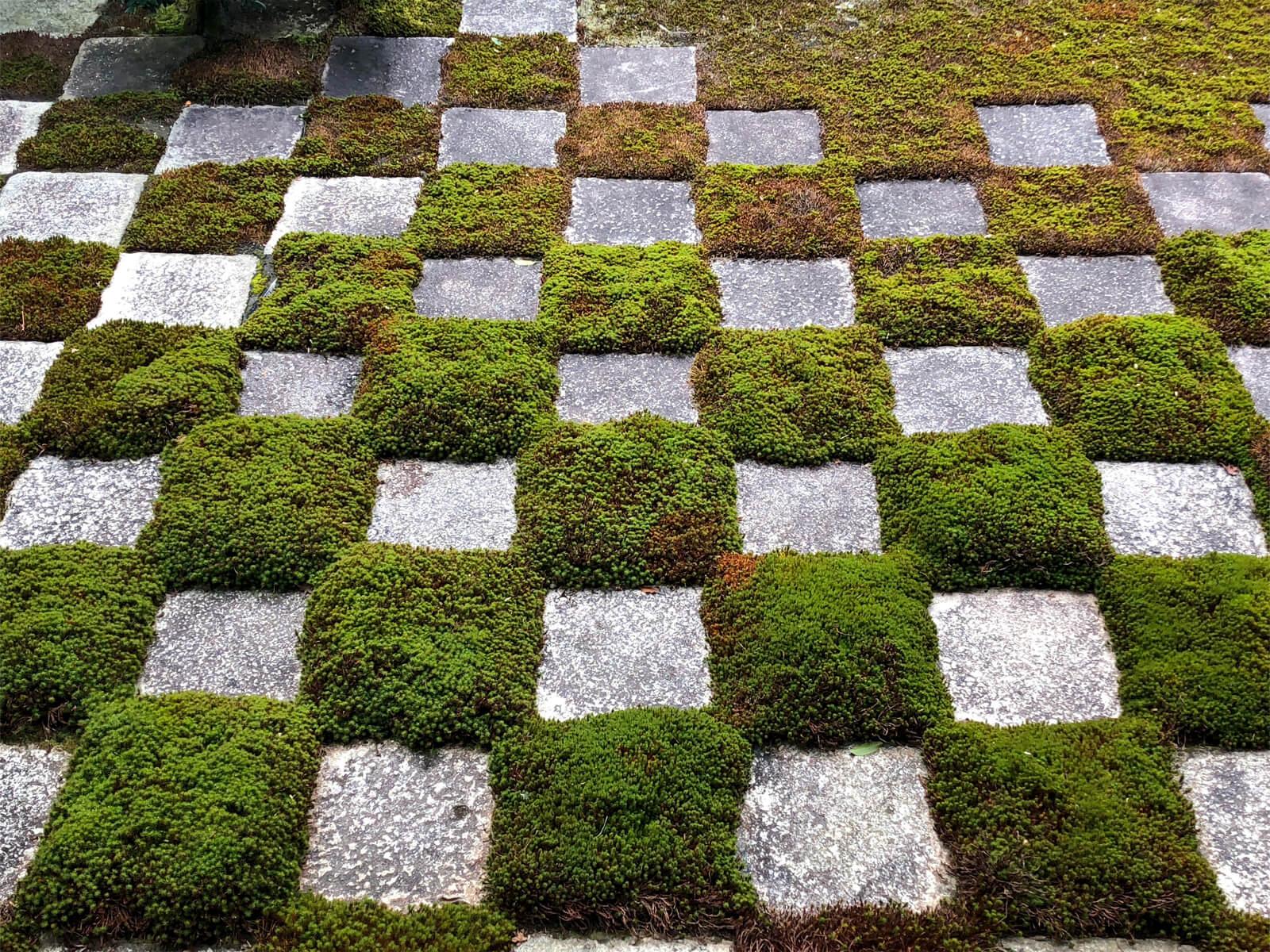 東福寺 本坊庭園の市松模様の苔