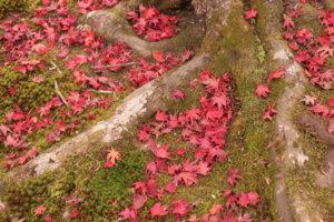 木の根元に落ちた紅葉