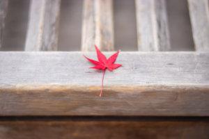 賽銭箱に落ちた1枚の紅葉の葉