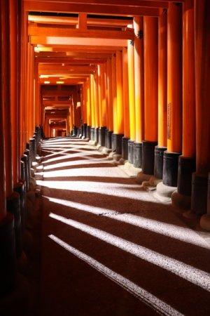 千本鳥居の光と影(左側)