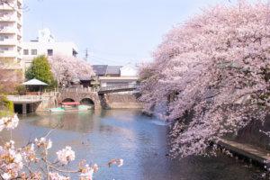 美登鯉橋から眺める桜と水門川