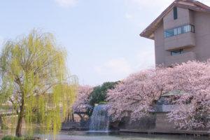 桜と柳と水門川