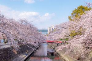 ミニ奥の細道で桜が満開