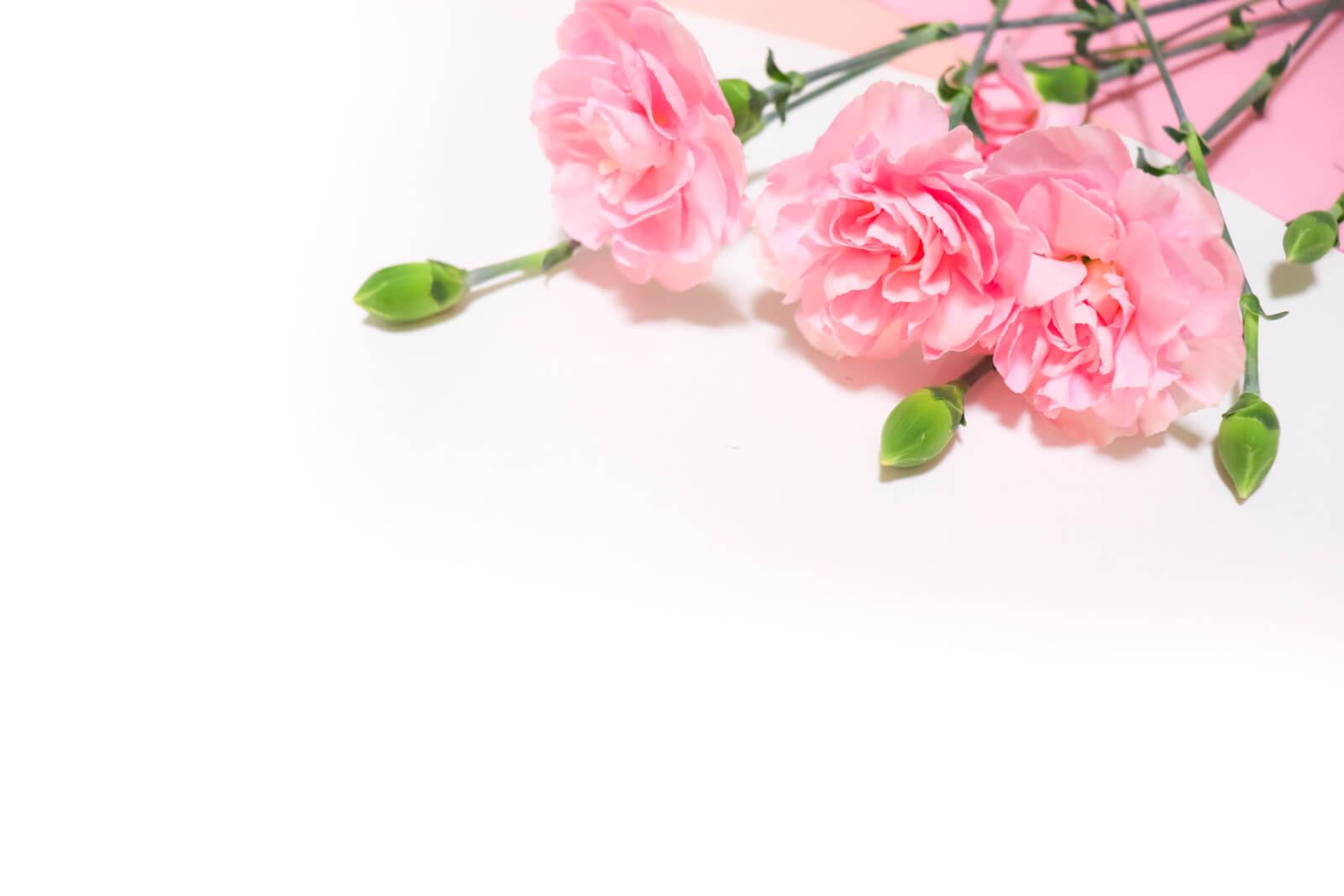 ピンク色のカーネーション(右上)