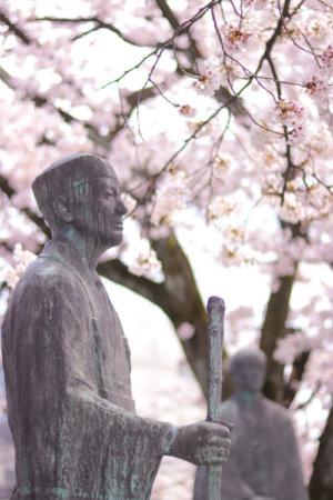 桜の下で再開する松尾芭蕉と河合曾良