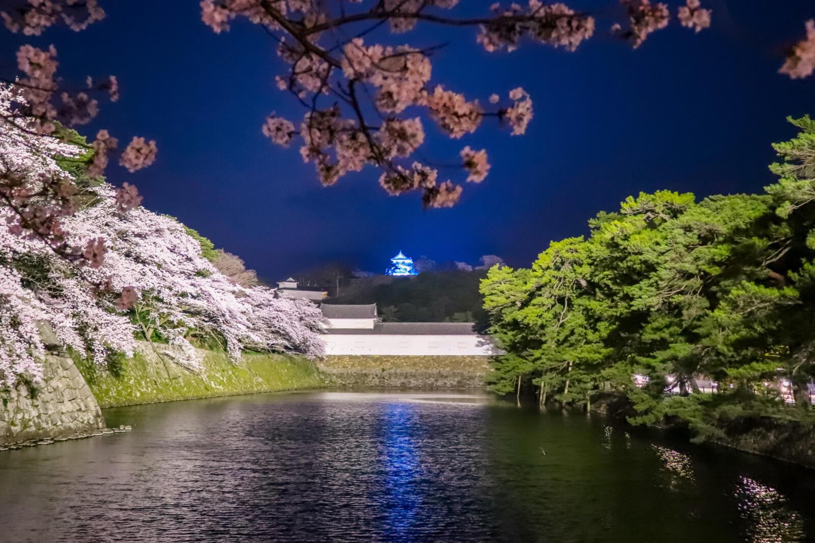 お堀から見る彦根城の桜