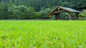 山の中の芝生