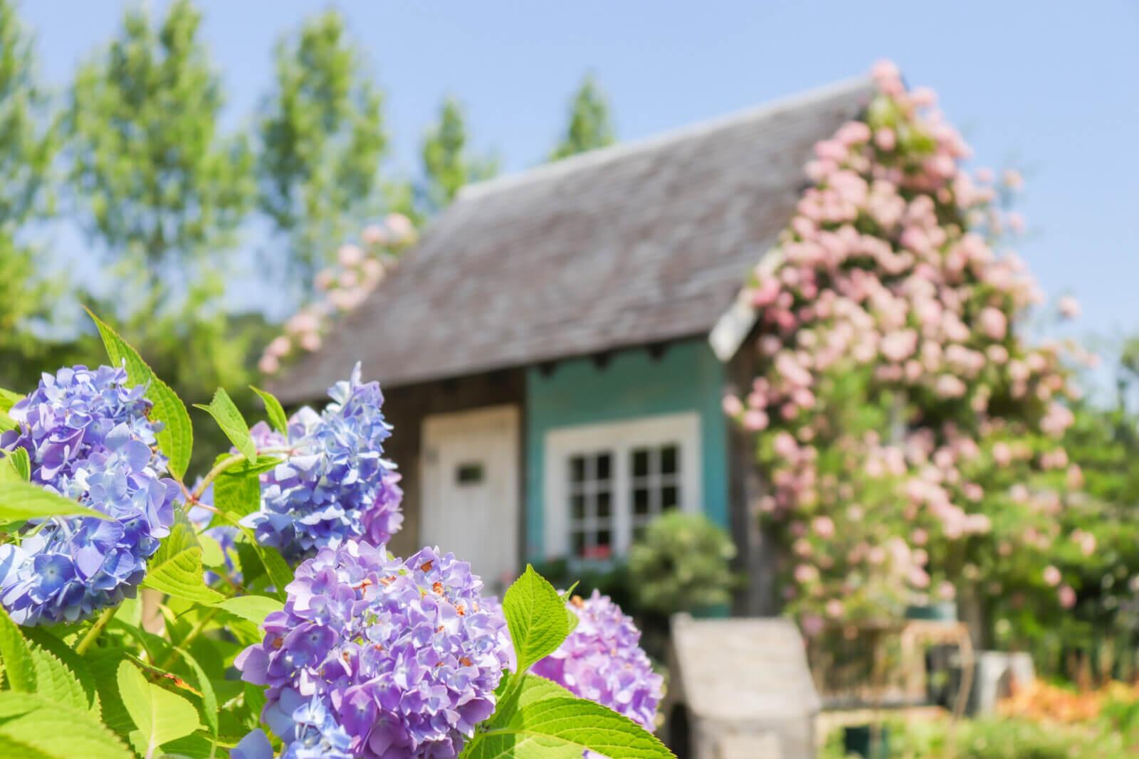 紫陽花とフラワーハウス