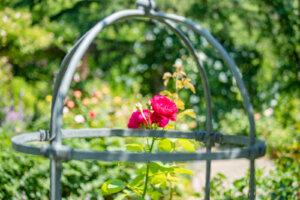 鳥籠とバラが「美女と野獣」みたい