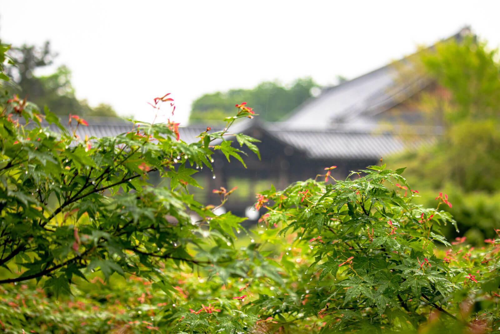 雨と新緑と通天橋