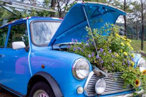 青い車MINIのボンネットに花
